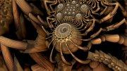image momma-spider-jpg